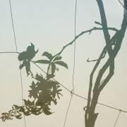 Blatt, Blätter, Schattenbild