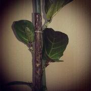 Pflanze, Natur