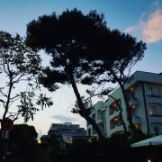 Baum, Wipfel, Abendhimmel, Riccione