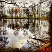 Herbst, See, Bäume, Spiegelung