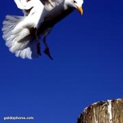 Möwe, Vogel, Landung