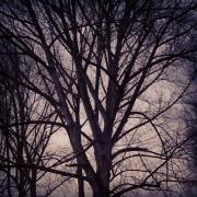 Gegenlicht, Äste, Baum