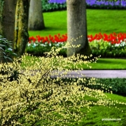 Landschaft, Park, Frühling