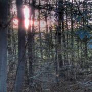 Baum, Wald, Natur, Herbst