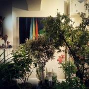 Natur, Blume, Garten, Zimmer