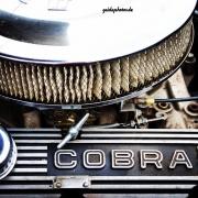 Fahrzeug, Auto, KFZ, Cobra, Motor, Technik