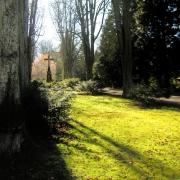 Landschaft, Park, Gegenlicht