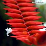 Blüte, weiß mit Rot