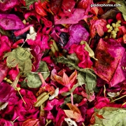 Blüte, Blütenblätter, rot