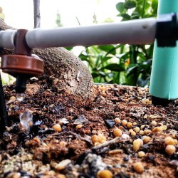 Tropfbewässerung, Pflanze, Natur