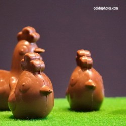 Huhn, Schokolade, Naschen, Ostern,