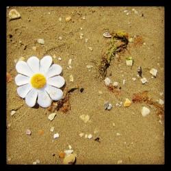 Blume am Strand